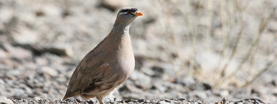 تیهو - پارک ملی قمیشلو