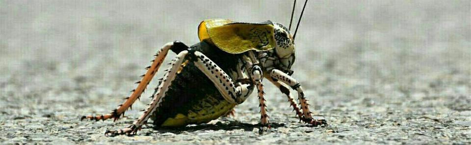 تنوع و زیبایی در دنیای حشرات- زیستگاههای طبیعی سمیرم/ عکس: رامبد ربیعی