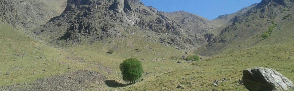 منطقه حفاظت شده کرکس/عکس: محمد عباسی