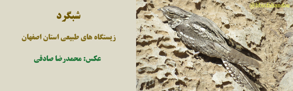 شبگرد - زیستگاه های طبیعی استان اصفهان/ عکس از: محمدرضا صادقی