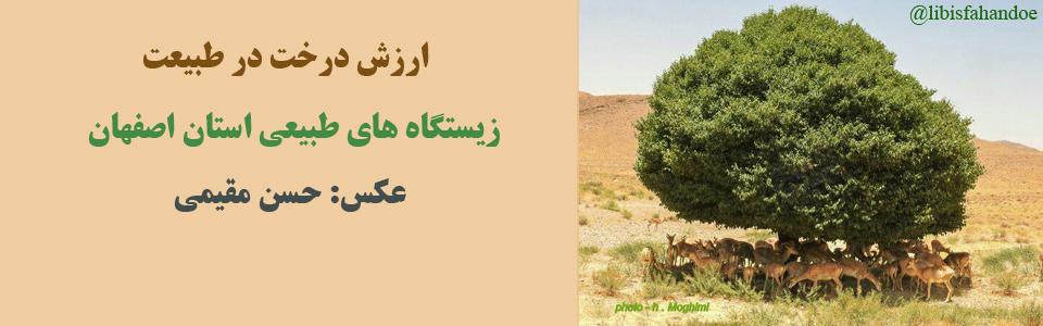 ارزش درخت در طبیعت - زیستگاه های طبیعی استان اصفهان/ عکس: حسن مقیمی