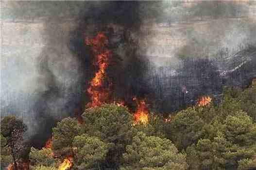 درخواست محيط زيست براي اشد مجازات آتش افروزان جنگلها ومراتع