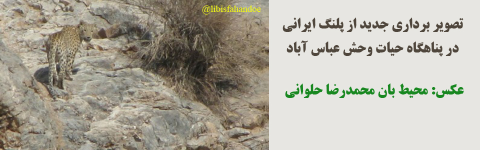 پلنگ ايراني - پناهگاه حيات وحش عباس آباد/ عکس از: محمدرضا حلوانی