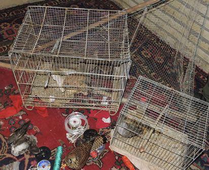 كشف و ضبط  هشت پرنده وحشي در شهرستان برخوار